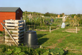 Charlton Down Allotments - Now Established